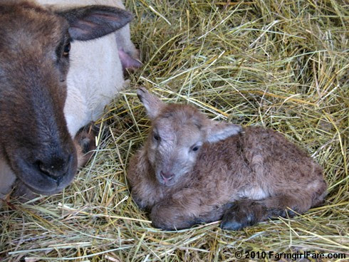 Newborn Confusion 6