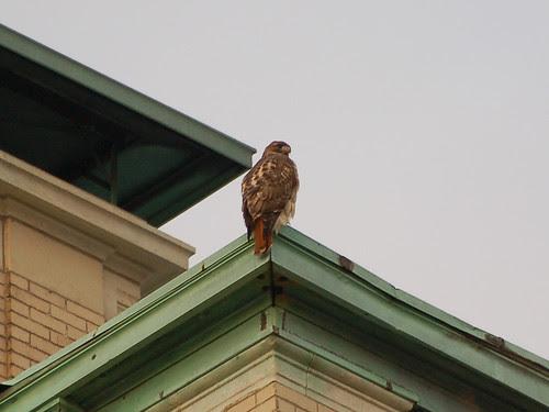 Guarding Morningside Drive
