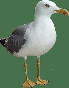 GAVIOTA COMO ANIMAL DE PODER
