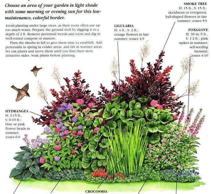 Shade Garden Zone 3 Perennial Garden Plans - gardenpicdesign