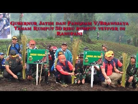 Video: Gubernur Jawa Timur Tanam 50 Ribu Rumput Vetiver