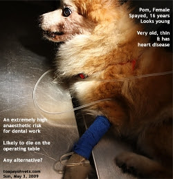 dental health care scaling pain in dogs singapore toa payoh vets