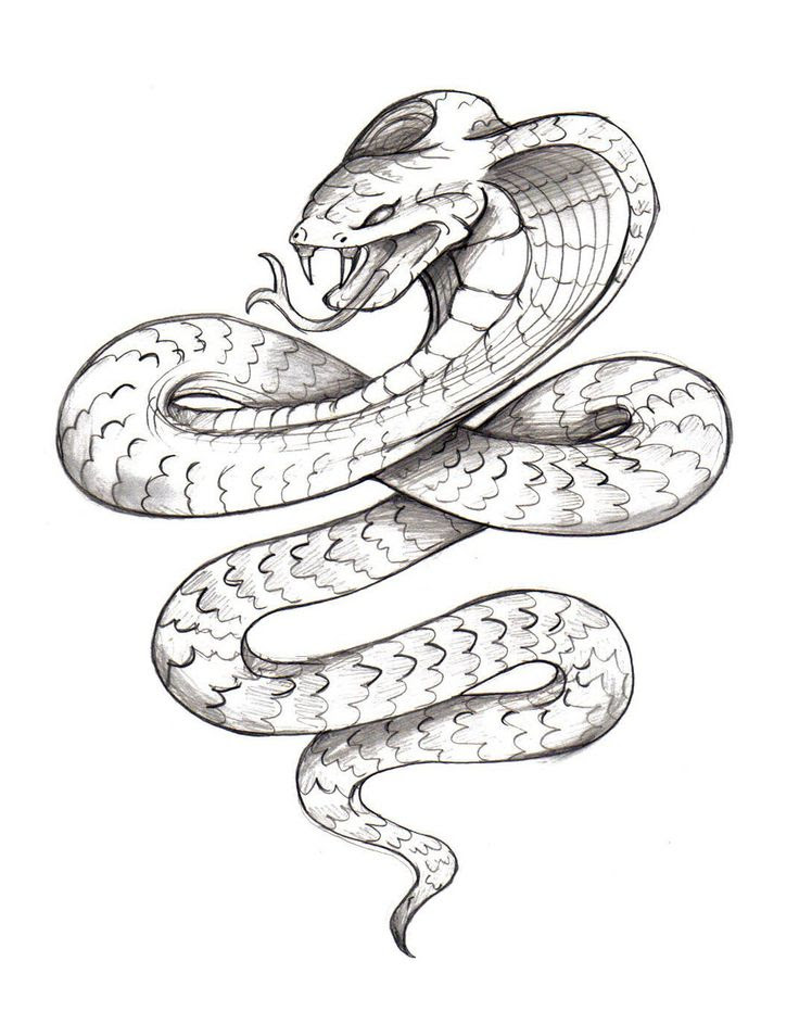 Japanese Snake Drawing At Getdrawingscom Free For Personal Use