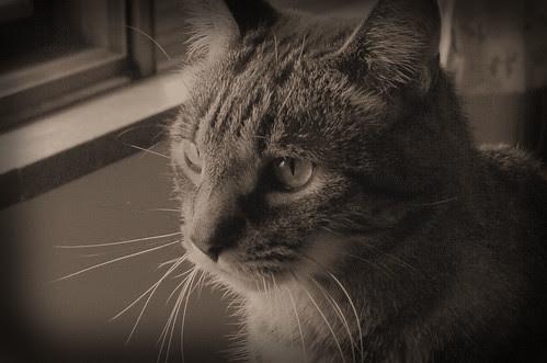 Classic Feline