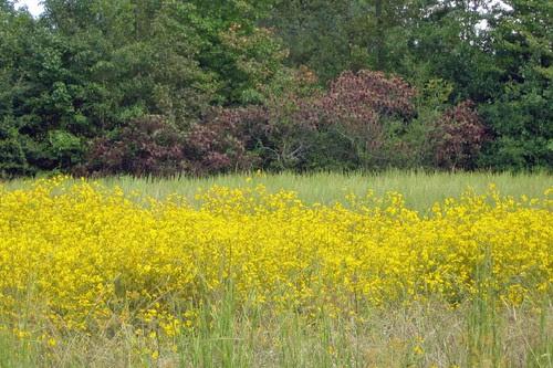 Field of Flowers in Mena Arkansas