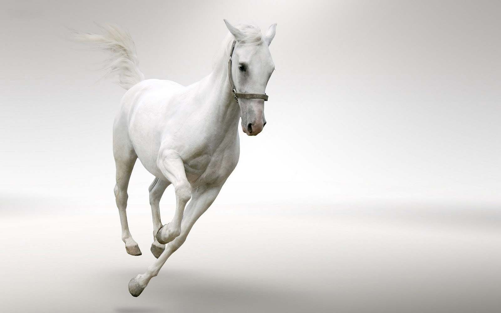 Stunning White Horse - Colors Photo (34711713) - Fanpop