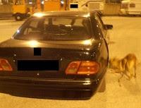 Σκύλος του Λιμενικού μύρισε 10 κιλά ναρκωτικών ουσιών