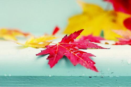 Autumn leaves by Jackie Rueda