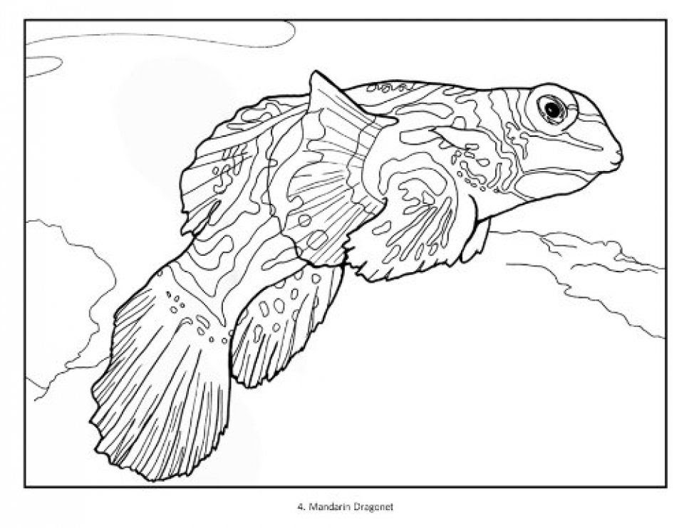 Tropical Fish Coloring Book: Susan Koop, Alf Jacob Nilsen ...