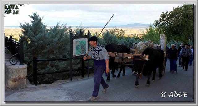 4 Entrando a la plaza de Poza de la Sal la Cabaña Real de Carreteros de Quintanar de la Sierra