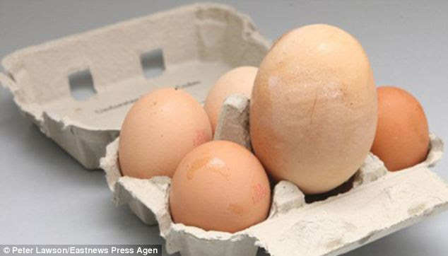 This giant egg was laid by a hen in Eastwood, Essex and weighed 5.7ozs