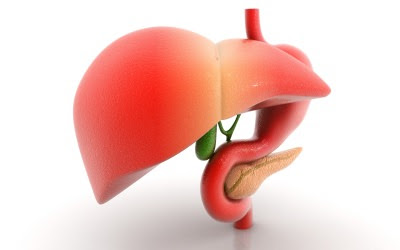 Located only below the rib cage to  our left How to Protect as well as Heal Your Liver!