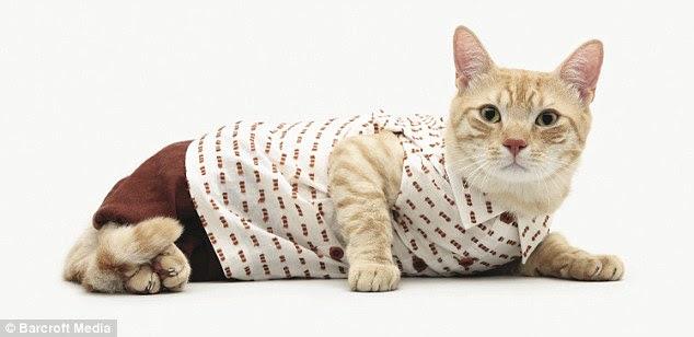 Gambar Kucing Eek godean.web.id