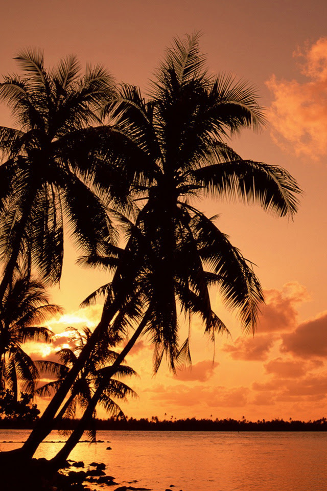 Palm Trees iPhone Wallpaper HD