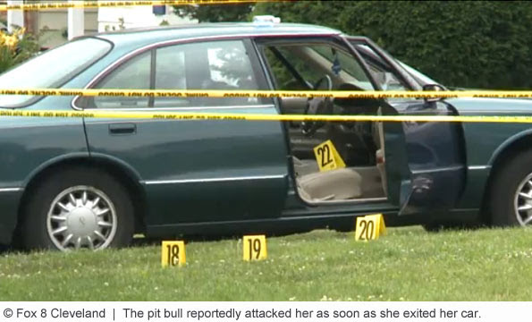 pit bull kills woman in shaker heights