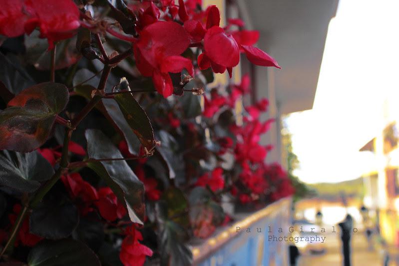 Flores rojas 800 signed