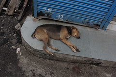 in dogs paradise .. dogs keep human beings as pets by firoze shakir photographerno1
