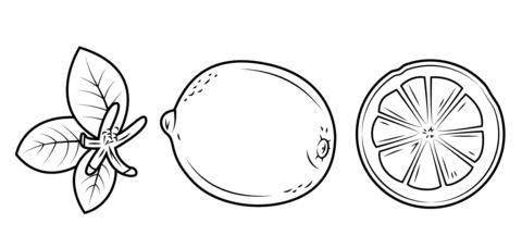 Dibujo De Hojas De Limón Limón Entero Y Su Sección Cortada Para