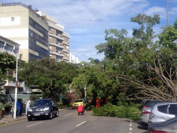 Mais uma árvore caída na Lagoa (Foto: João Ricardo Gonçalves / G1)