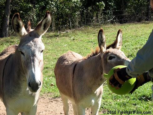 Donkey Ball 6