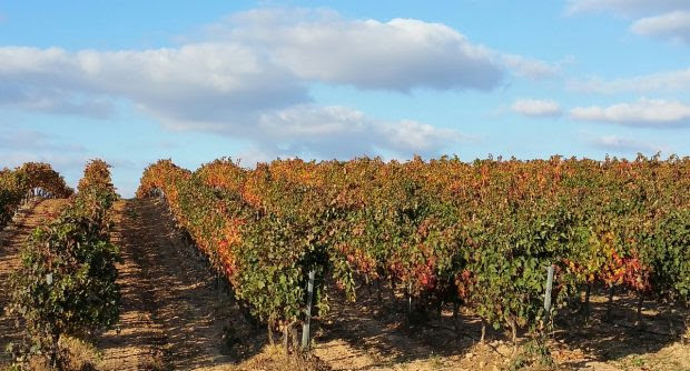 The Hidden Gems of Spain's Rioja Wine Region