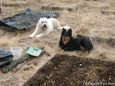Planting Garlic with Marta and Bear 2-10-09