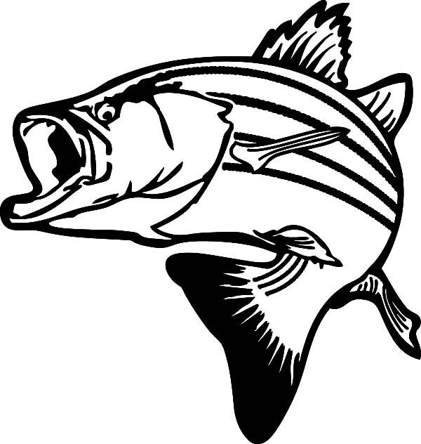 Drawing Stripped Bass Fish Coloring Pages | Best Place to ...