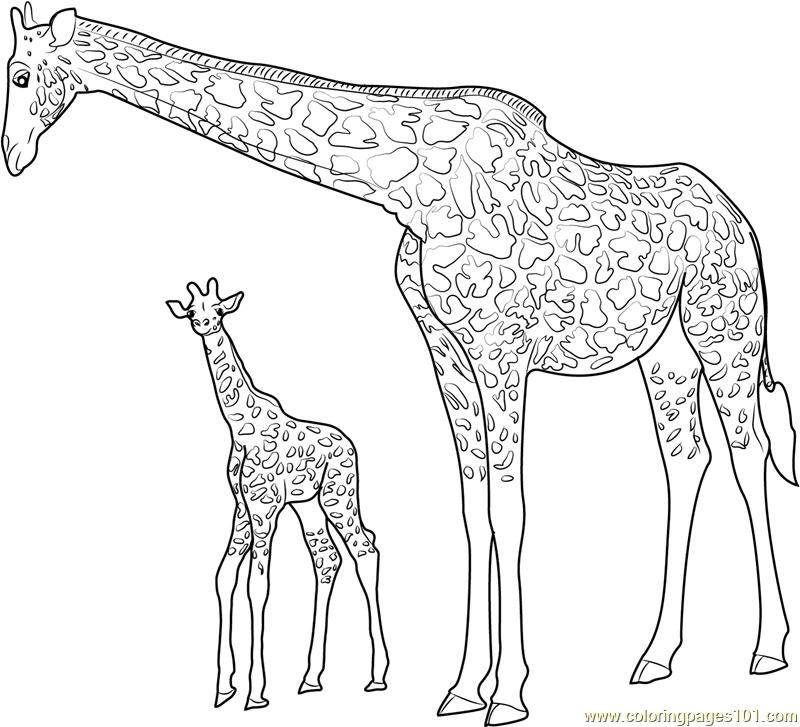 Color Giraffe For Kids