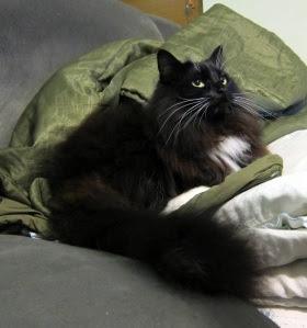 upright-cat