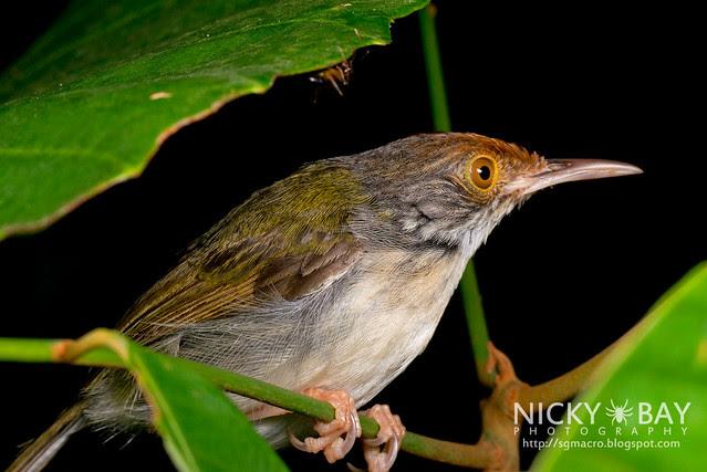 Unknown bird - DSC_2036