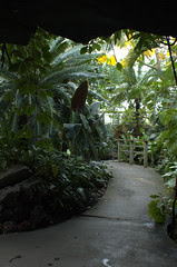 Tropical Pavilion, Steinhardt Conservatory, BBG