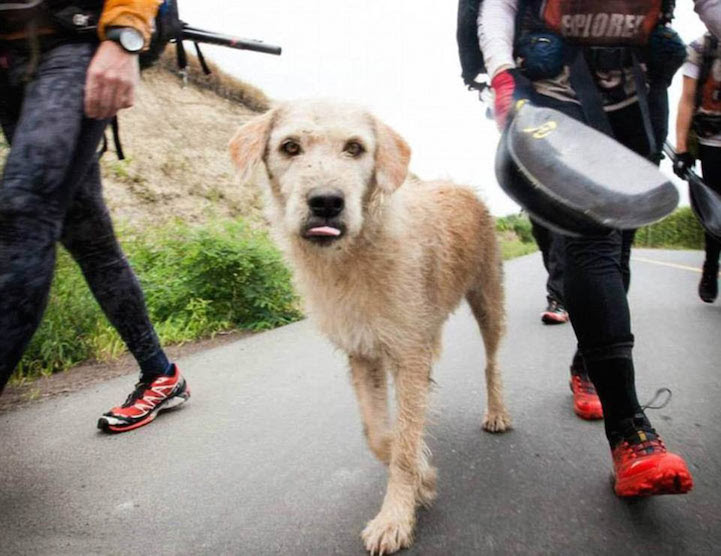 Stray_Dog_Arthur_Completed_430-mile_Race_3