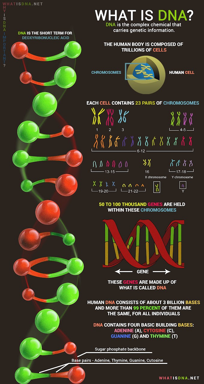 Infographic: What is DNA ?