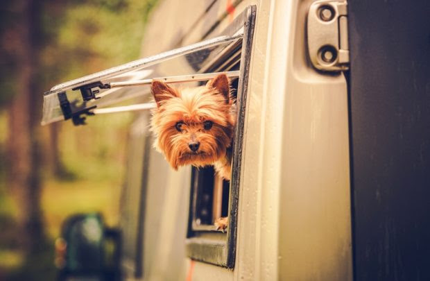 How to have the perfect RVing vacation with your dog