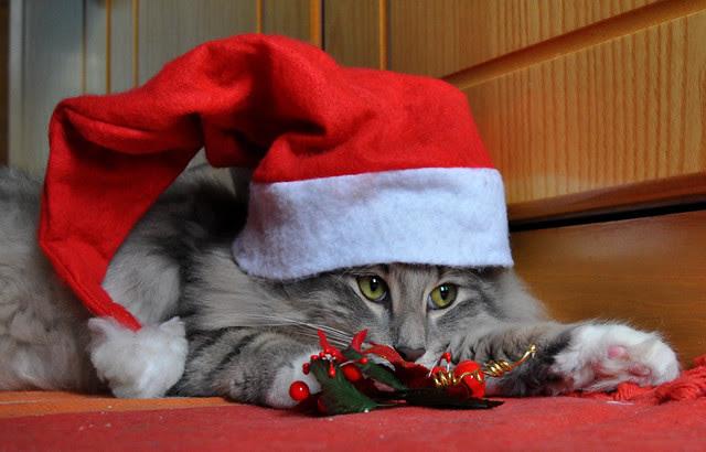 Christmas Yogi