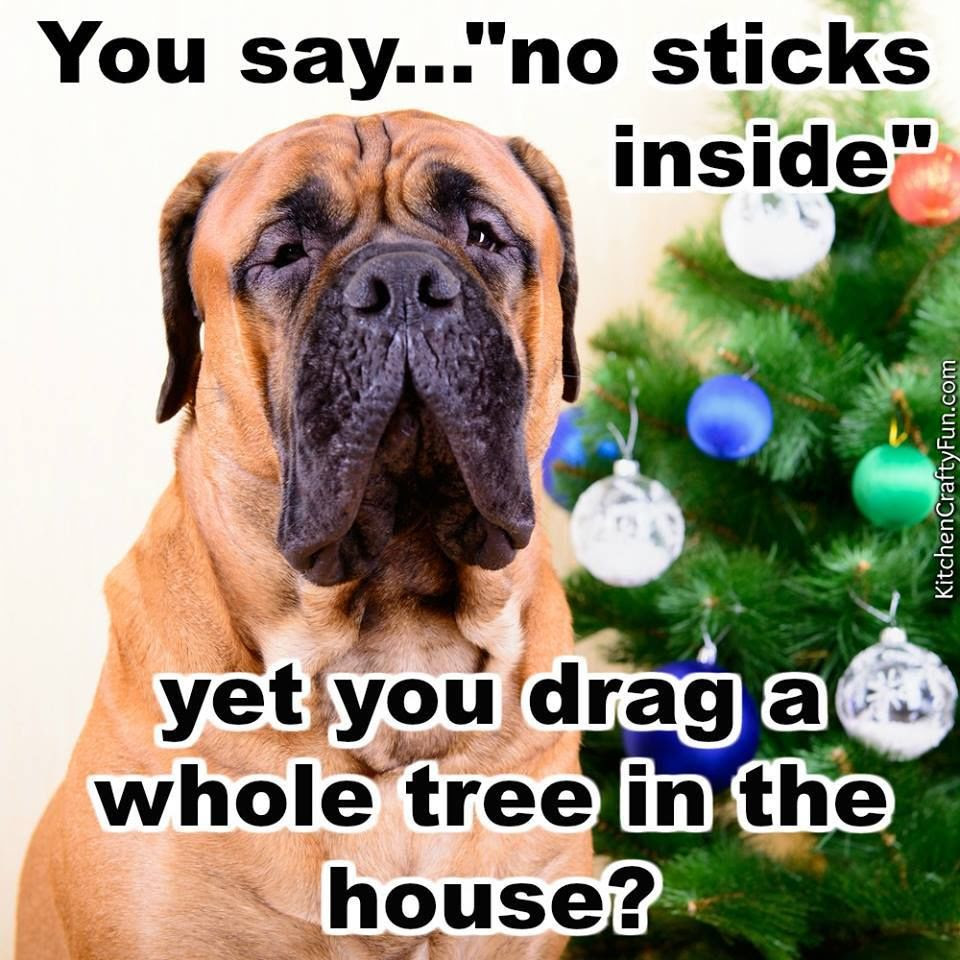 Christmas Dog Funny Quote Pictures, Photos, and Images for ...