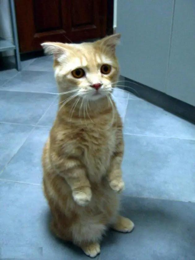 gato-triste-10