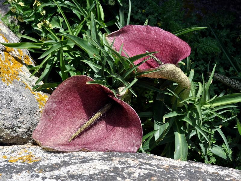 flores estranhas 10