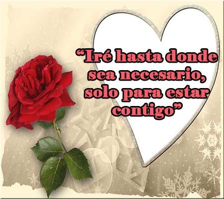 Rosas Rojas De Amor Con Frases Romanticas Rosas De Amor