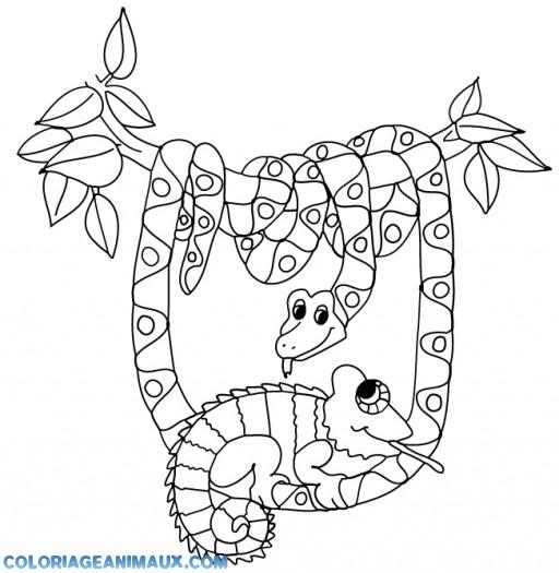 Coloriage Serpent Suspendu à Un Arbre à Imprimer