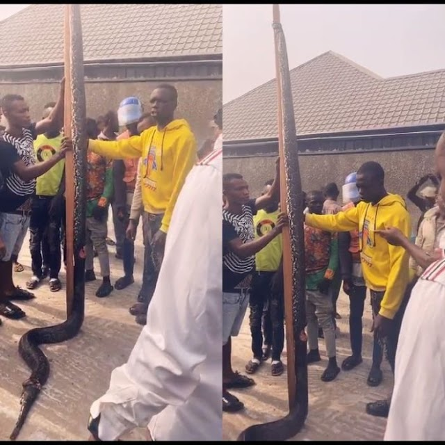 See The Huge Snake That Was Killed In Sapele Delta State (See Photos)
