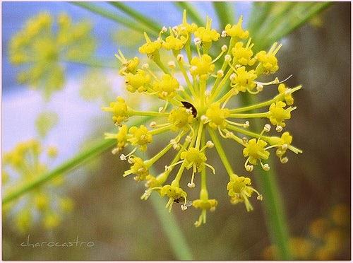 Quais são as melhores plantas no auxílio ao emagrecimento?