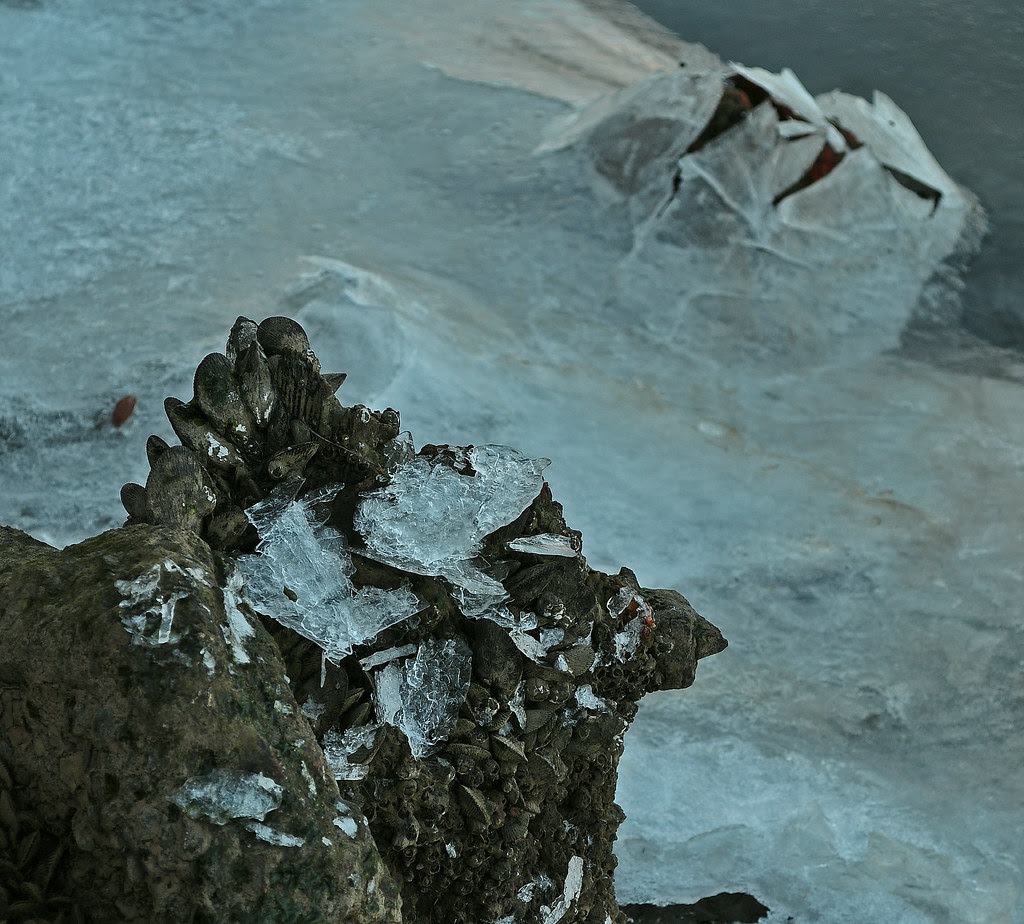Shellfish On Ice 6