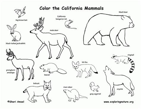 desert animals coloring pages coloring home