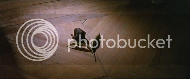 photo tulipe_noire-01.jpg