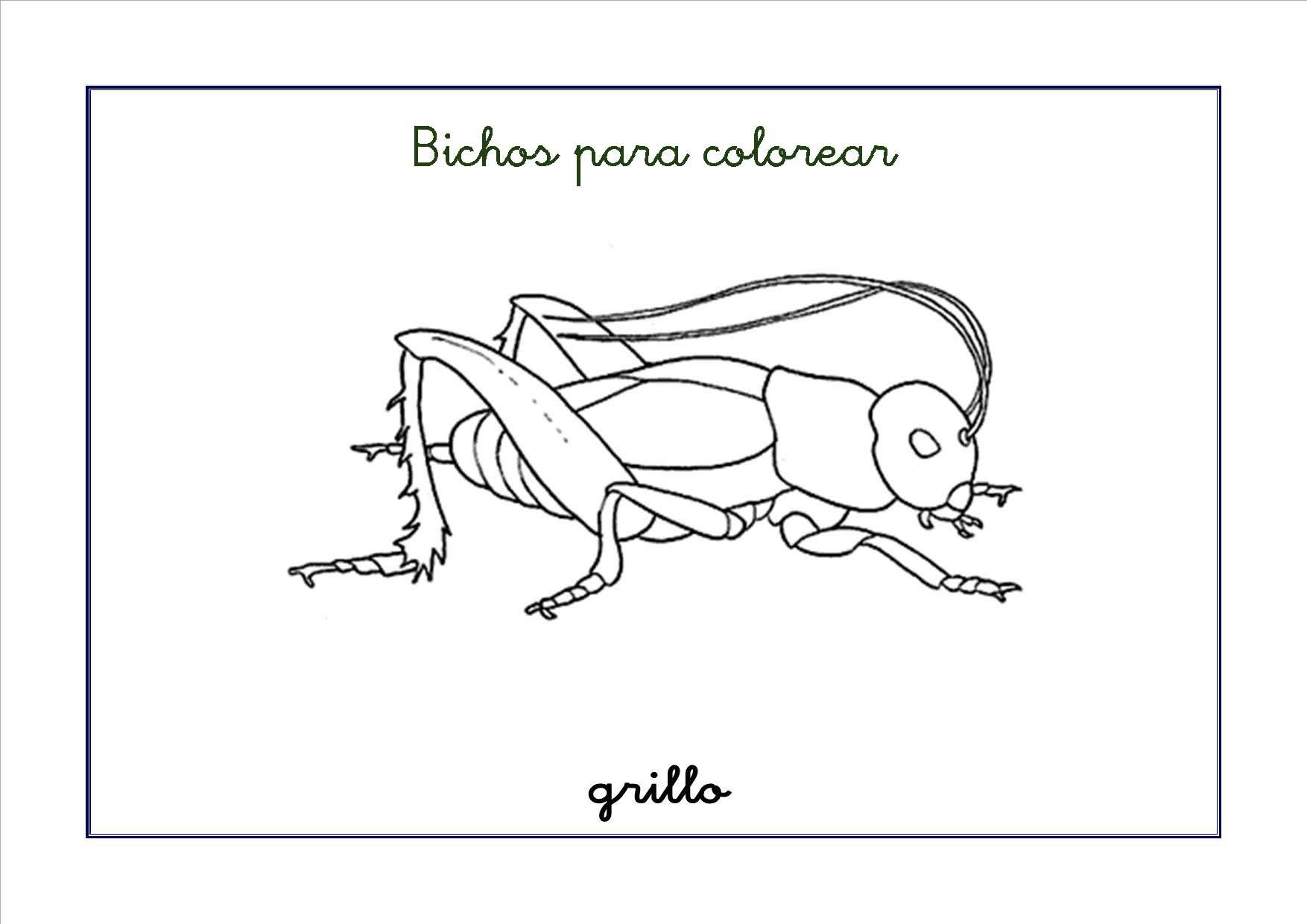 Dibujos De Insectos Para Colorear: .: Recursos Para El Aula: Fichas De Bichos Para Colorear
