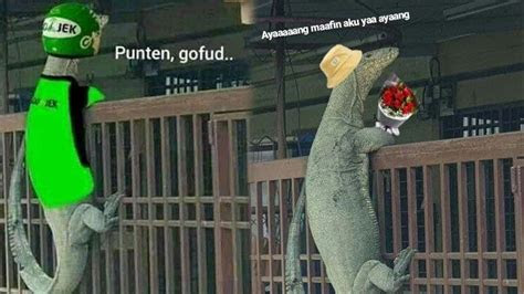 viral biawak panjat pagar berikut  meme lucu foto