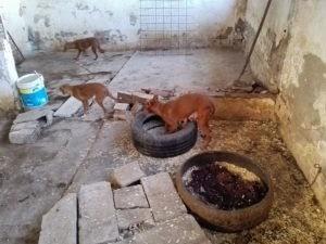 Katia, un desecho de cazador que ha pasado por el infierno, necesita nuestra ayuda