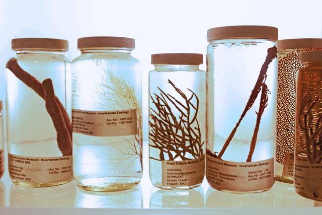 Jars with Specimens