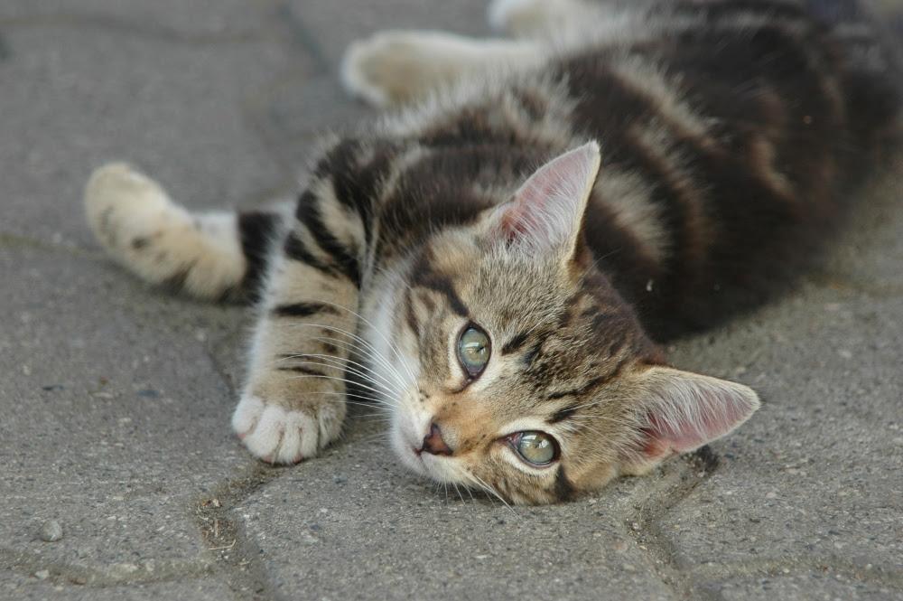 Katzenbaby Foto & Bild | tiere, tierkinder, natur Bilder ...
